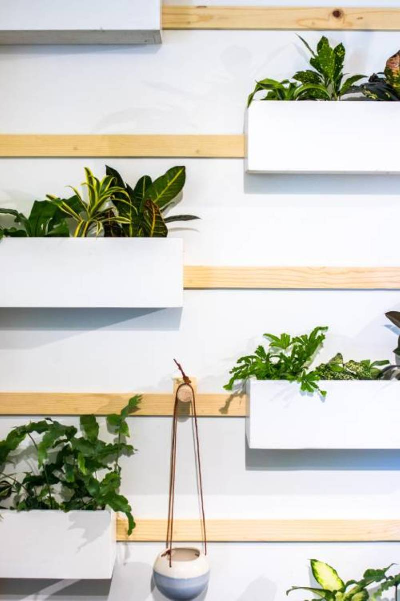 A wall of plants adds life to the space.