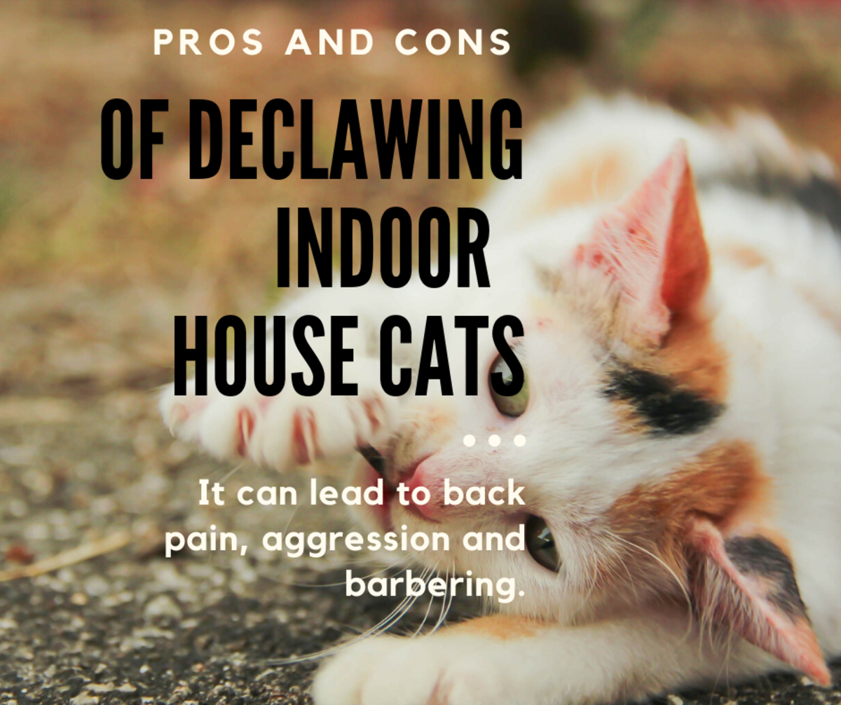 Pros and Cons of Declawing Your Indoor House Cat