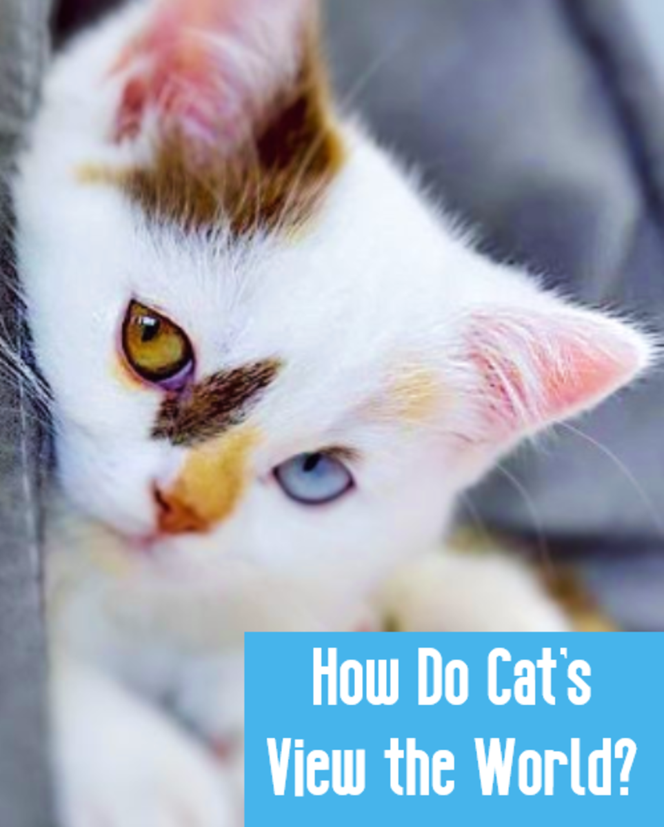 How Does My Cat See the World? - A Cat's Point of View
