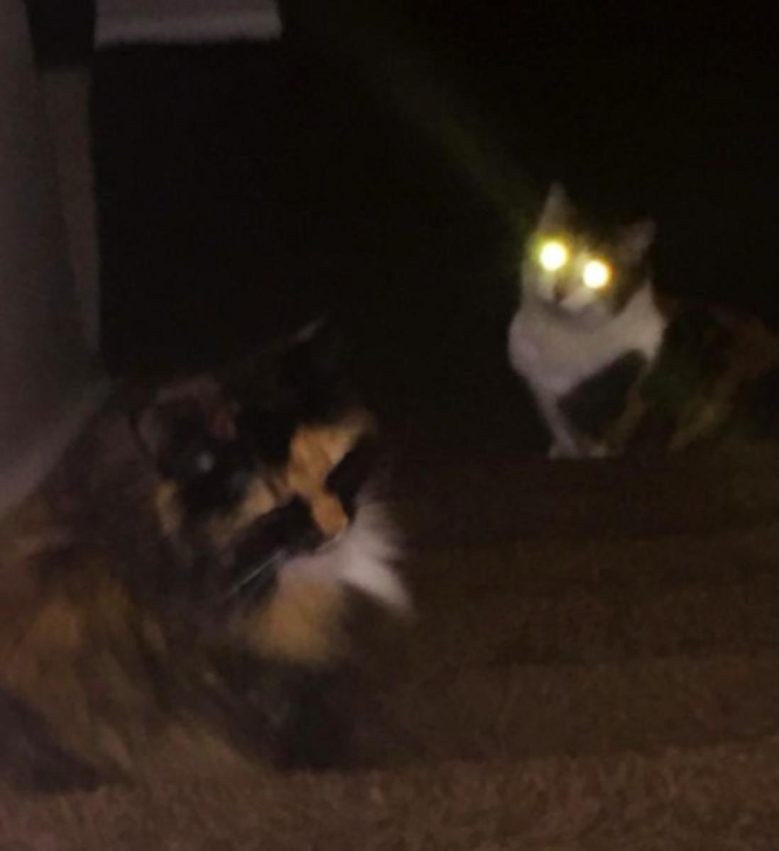 Cat's eyes glowing in the dark.