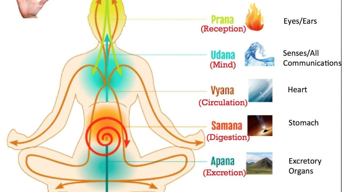 Prana and Apana and other vital energies of your body