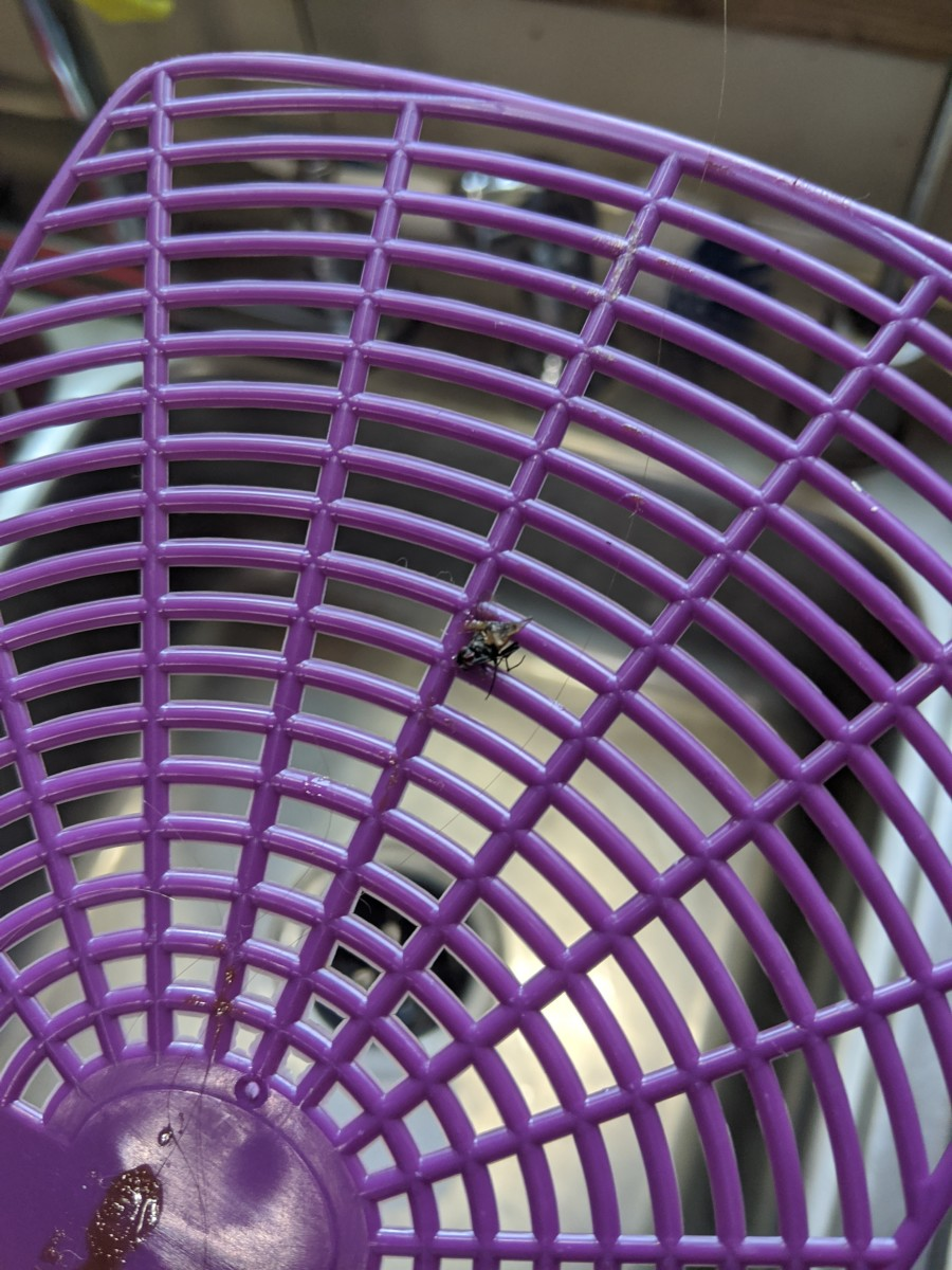 Fly wedged in swatter