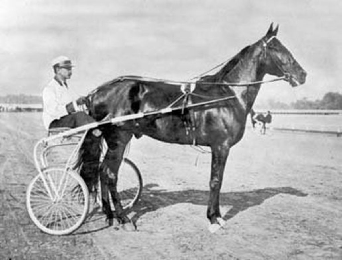 The Greatest Race Horse Of All Time