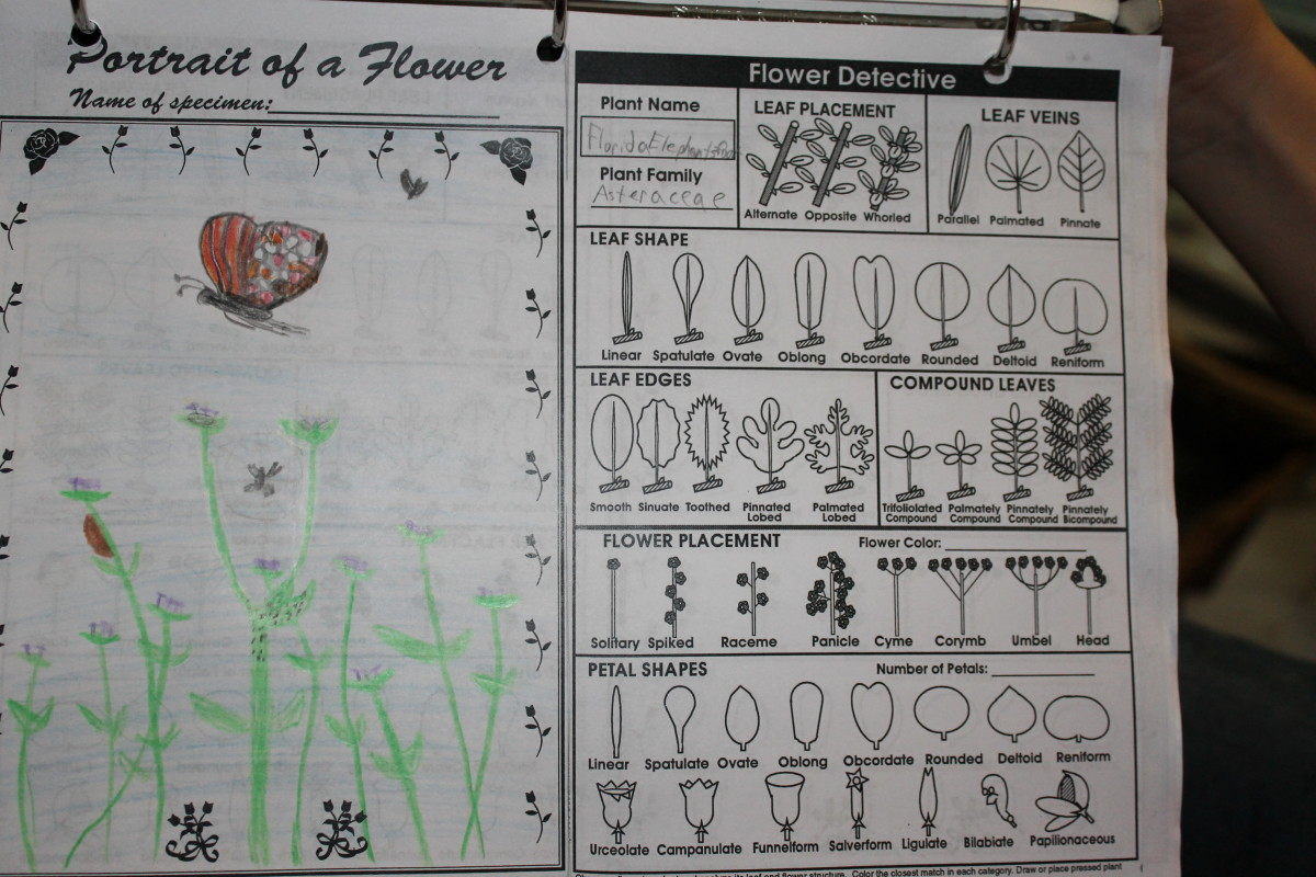 Homework assignment for Tuesday: Find and sketch 3 flowers and identify them.