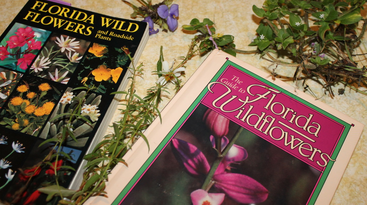 Learning how to use guide books to identify wild flowers