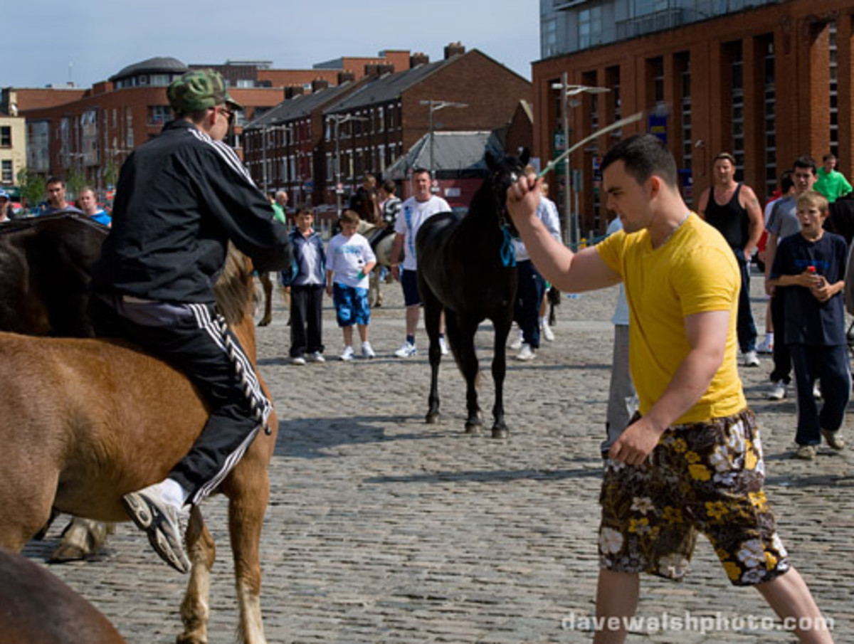 Animal abuse and cruelty at Smithfield Horse Market in Dublin