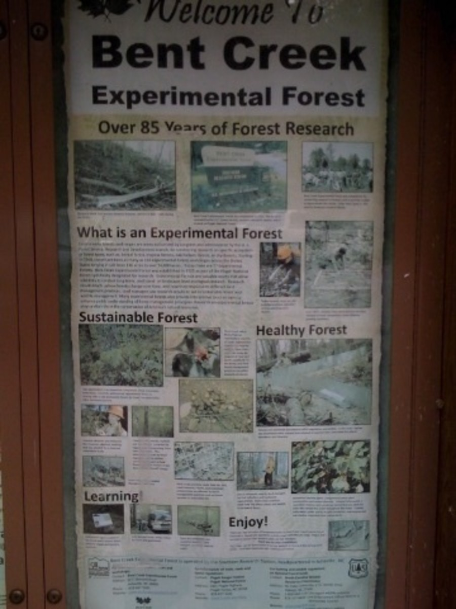 There's a lot going on in the Bent Creek Experimental Forest