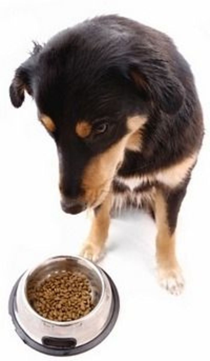 Canned Dog Food vs. Dry Kibble