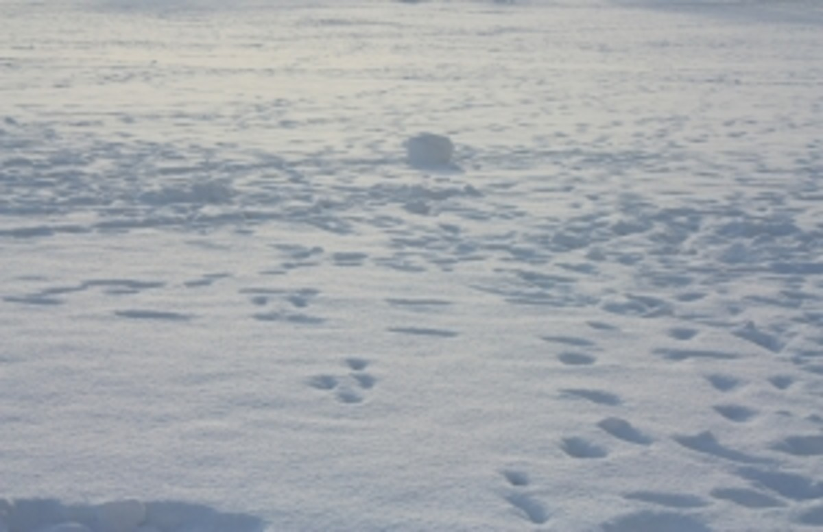 Thousands of miles of the Arctic look like this, much of it without footprints.