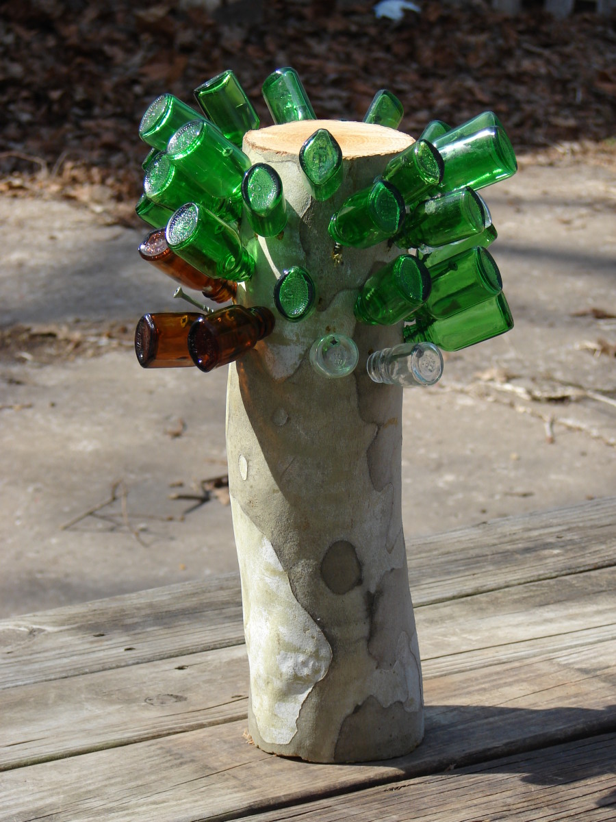 Bottle Tree stump. Photo copyright  Denise Alvarado, all rights reserved.
