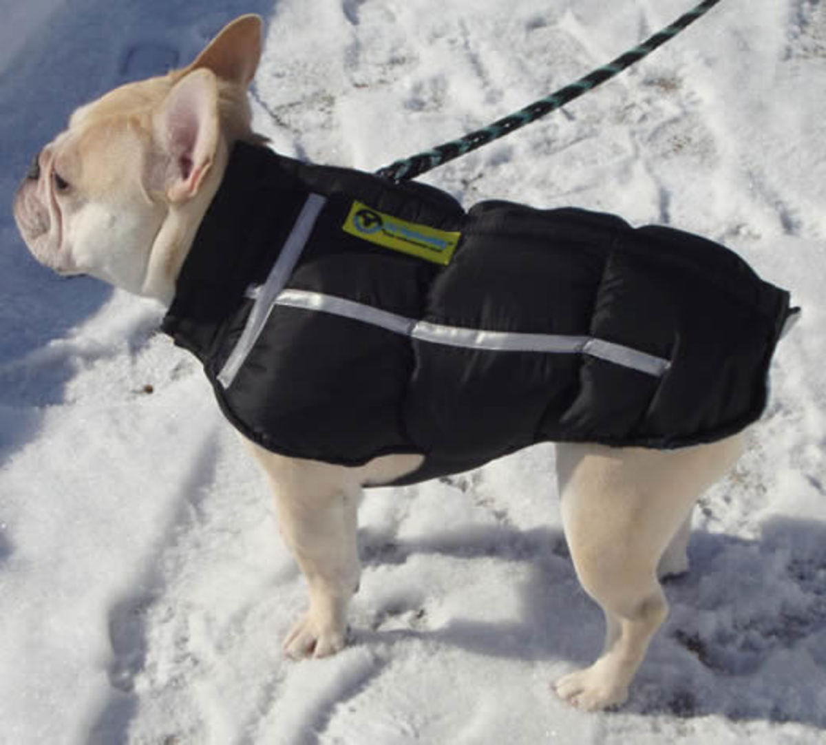 Teddy enjoyed his ChillyBuddy Winter Jacket in the snow.
