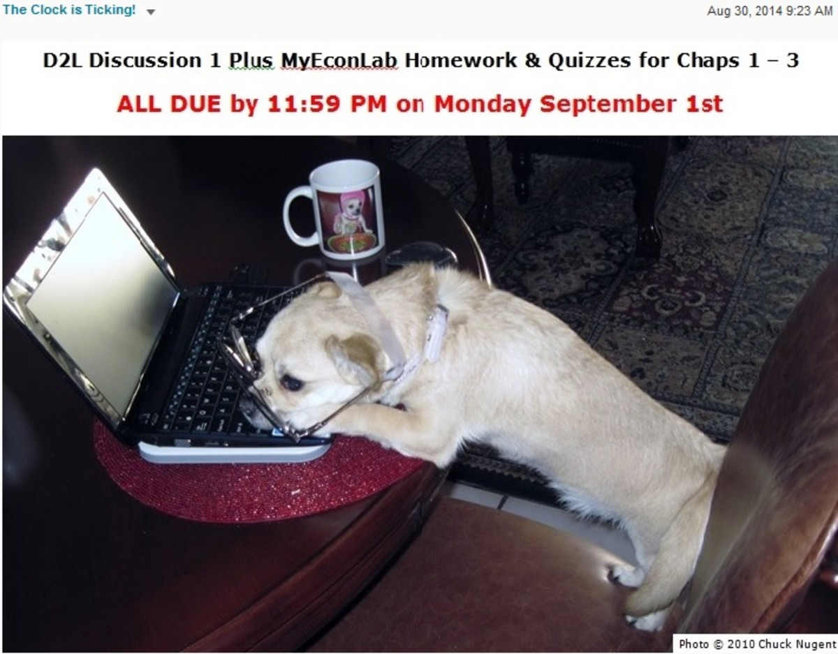Our dog, Chika, appearing in first reminder in my online course of assignments due.