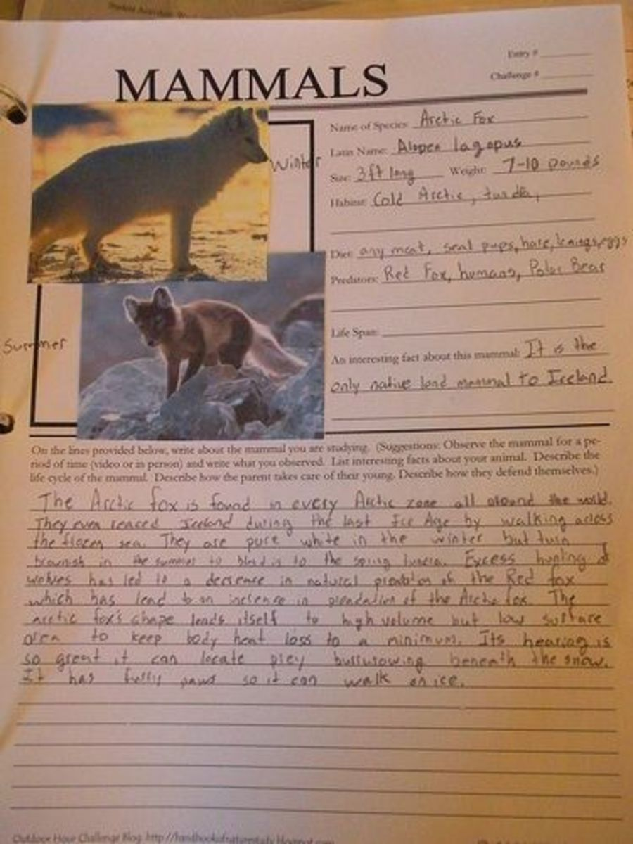 Mammals Notebook Page