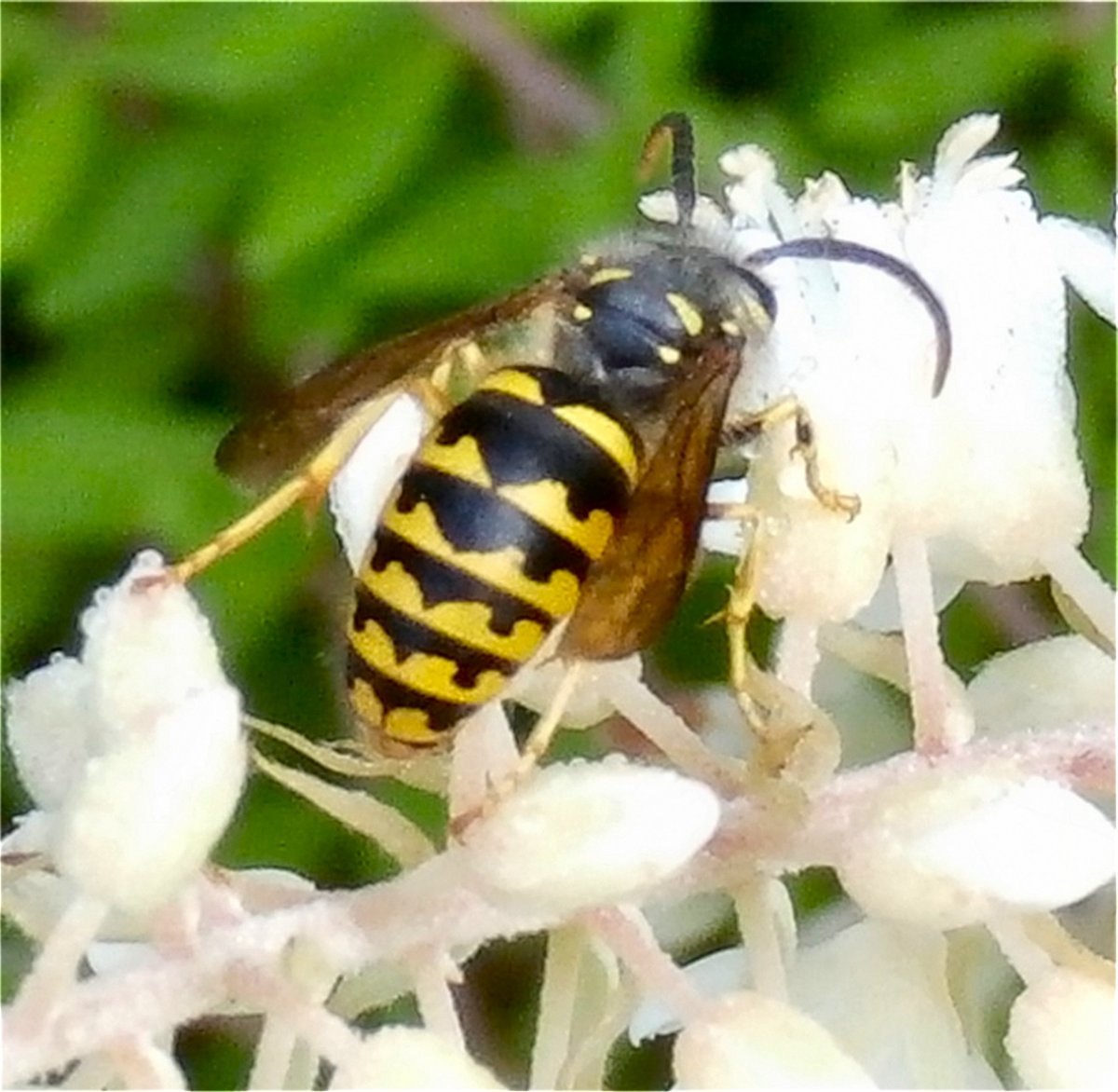 Photo Of Yellow Jacket by Tonie Cook