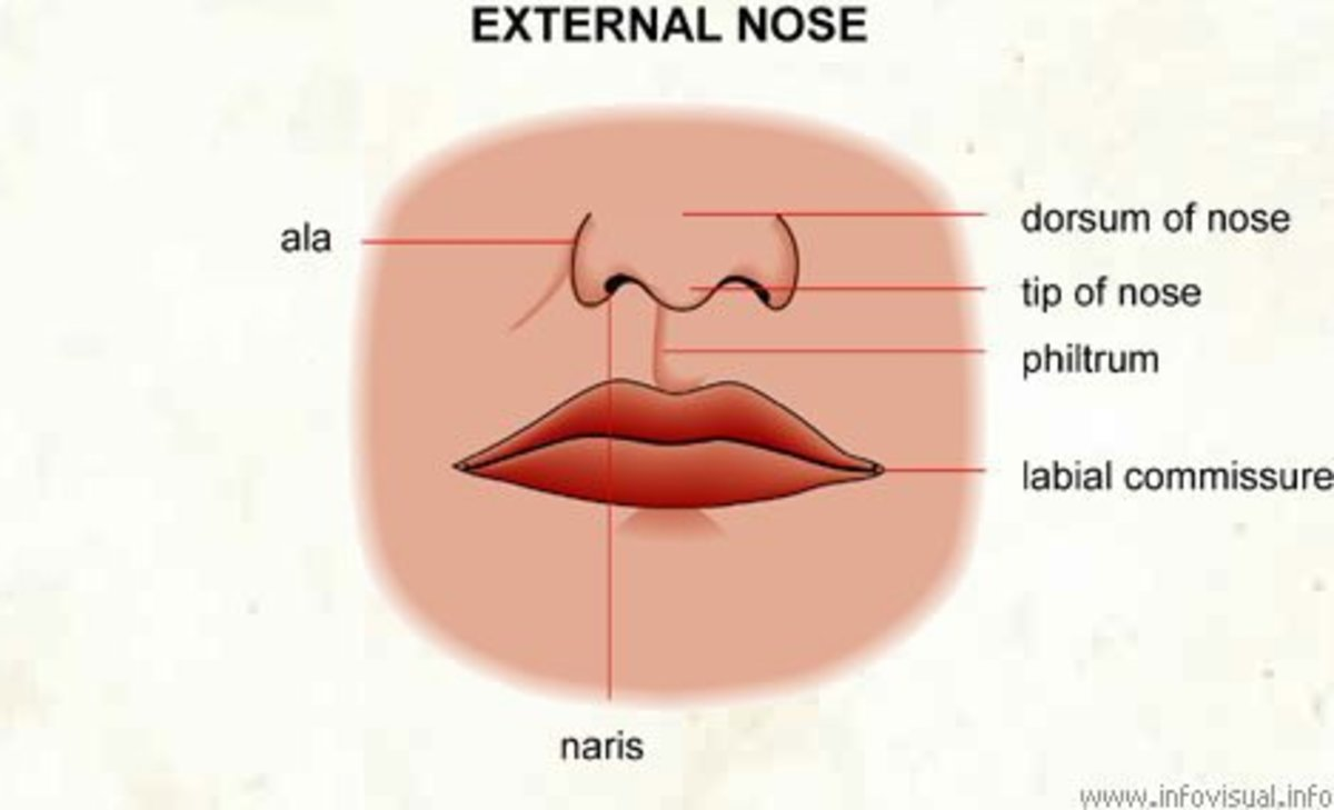 Demonstrating the location of the philtrum