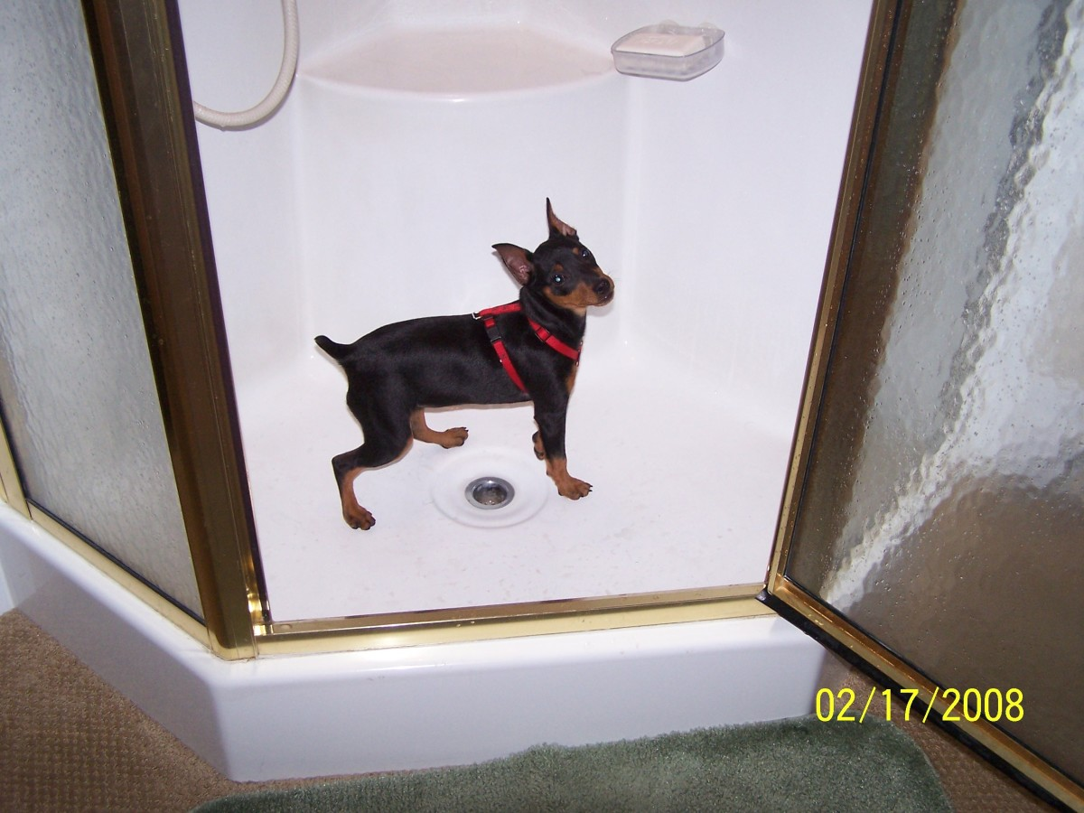 Now that's one HOT DOG- A working dog named Leah that has her own profile on HUBPAGES!!! She even writes hubs in the shower!!