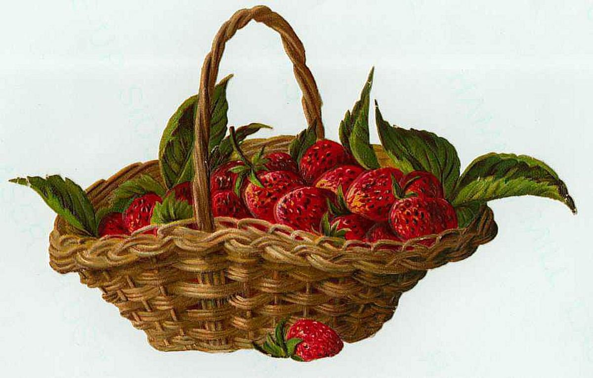 Vintage fruit clipart: a basket of strawberries