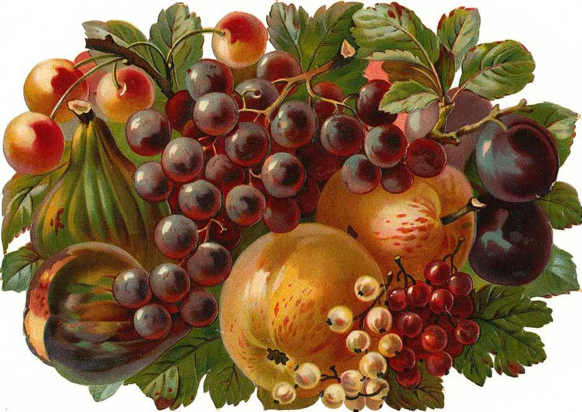 Victorian grapes, plums, cherries and apples