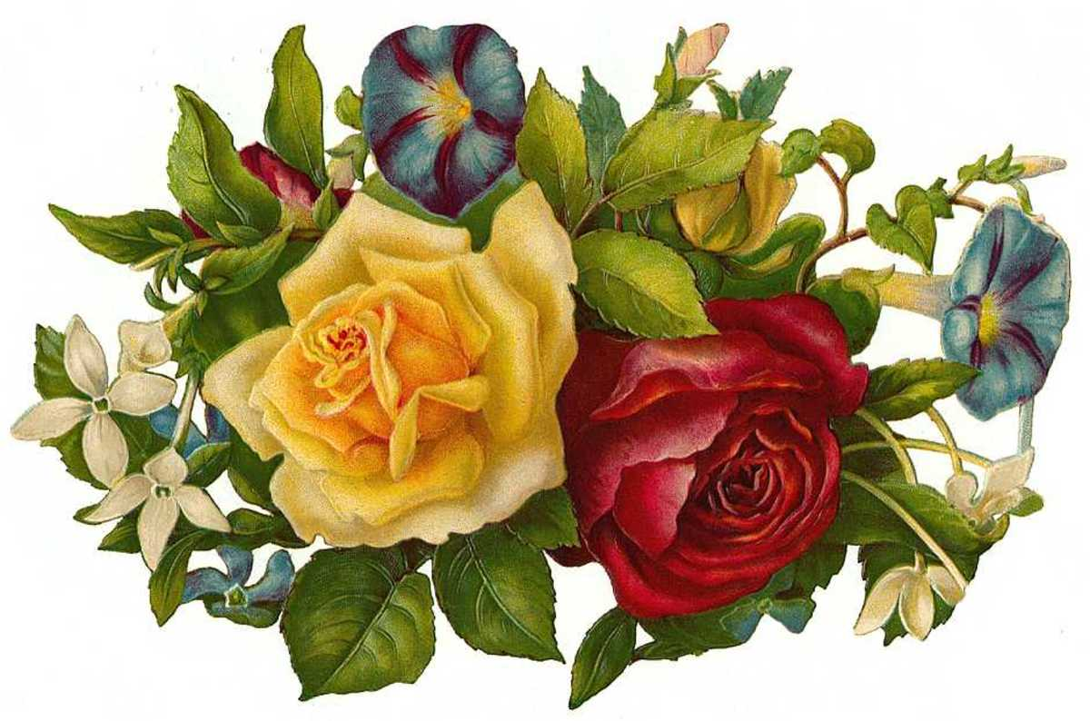 Victorian flowers: yellow and red rose and pansies