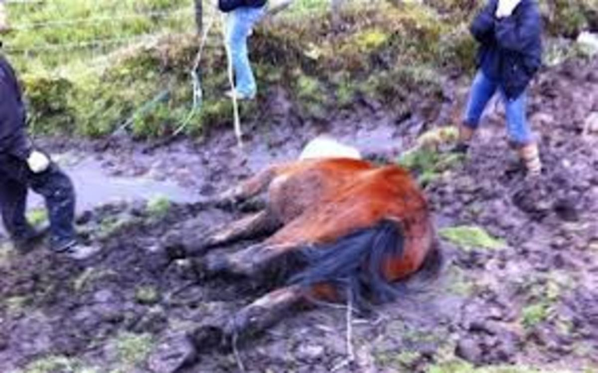 Something is killing ponies and other animals near Bladenboro N.C. and it is draining the animals of blood. No other damage is done to the animals. What is doing this. It appears to be the North Carolina Vampire Beast.