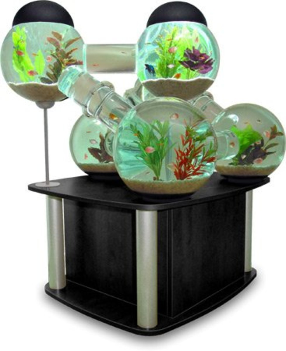 Setting up Fish Tank, if you've got the know how it could be a lot of fun building a tank like this