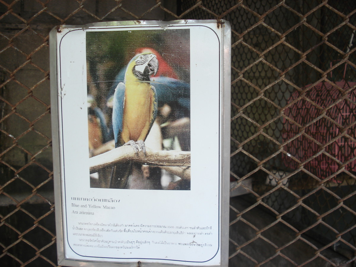 One of only a dozen very poor species ID signs in the zoo