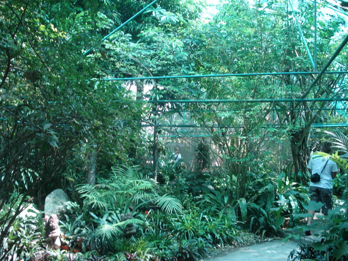 Probably the nicest enclosure in the zoo. Sadly fish were the most numerous occupants. Perhaps a dozen birds in all.