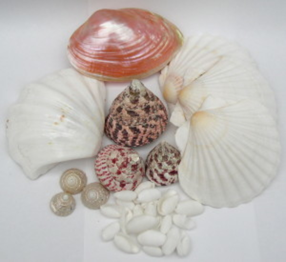 Collection of Polished shell