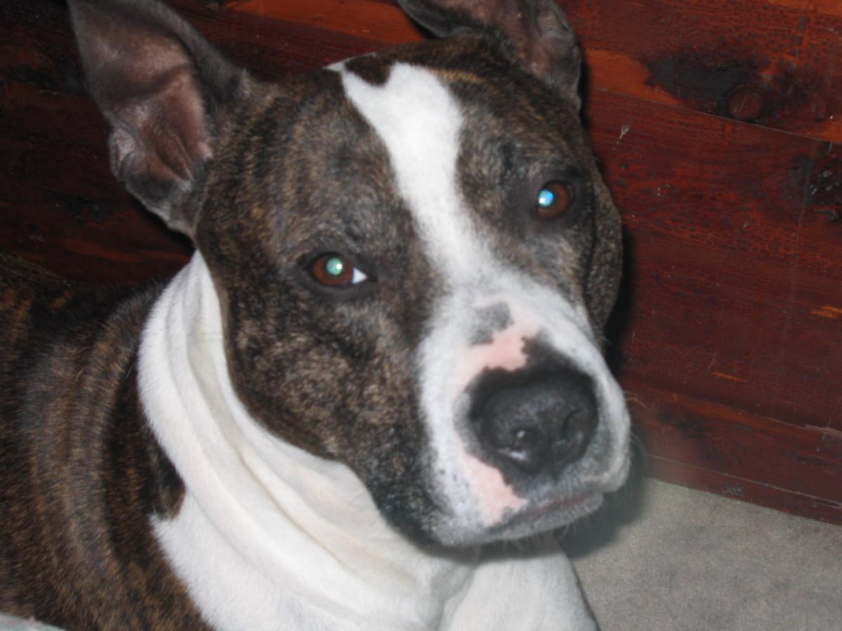 My dog Kaos
