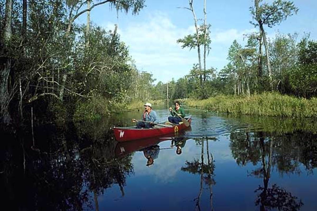 Many Activities can be found around the Okefnokee swamps