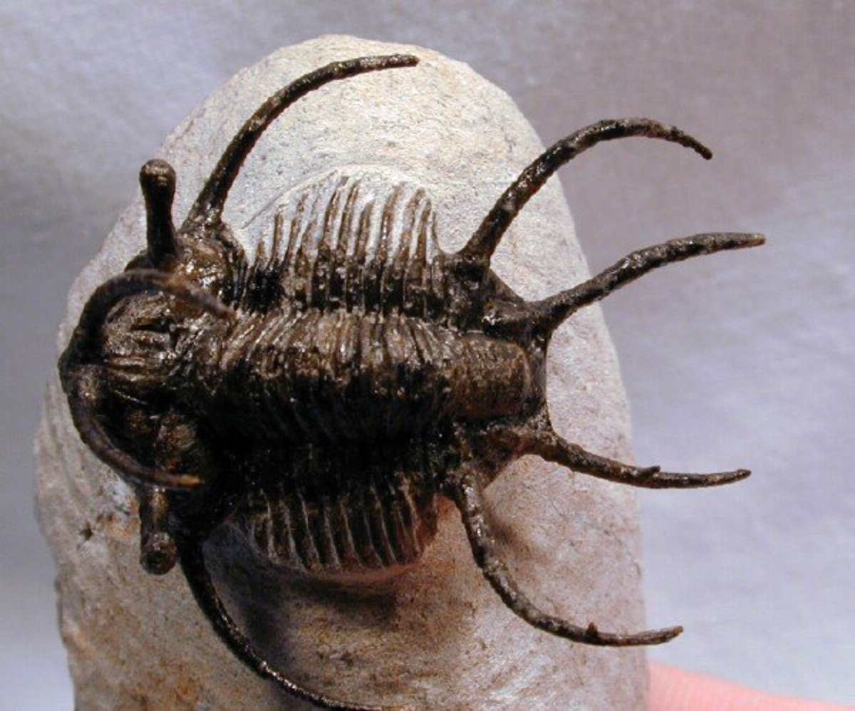 The Strangest Cambrian Creatures Ever Discovered