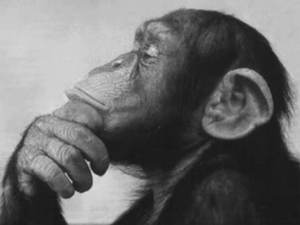 Do you have a monkey mind?