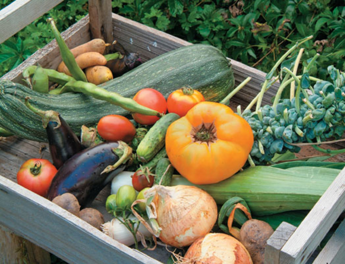 Vegetable Gardens Can Produce A Bounty Of Fresh Produce