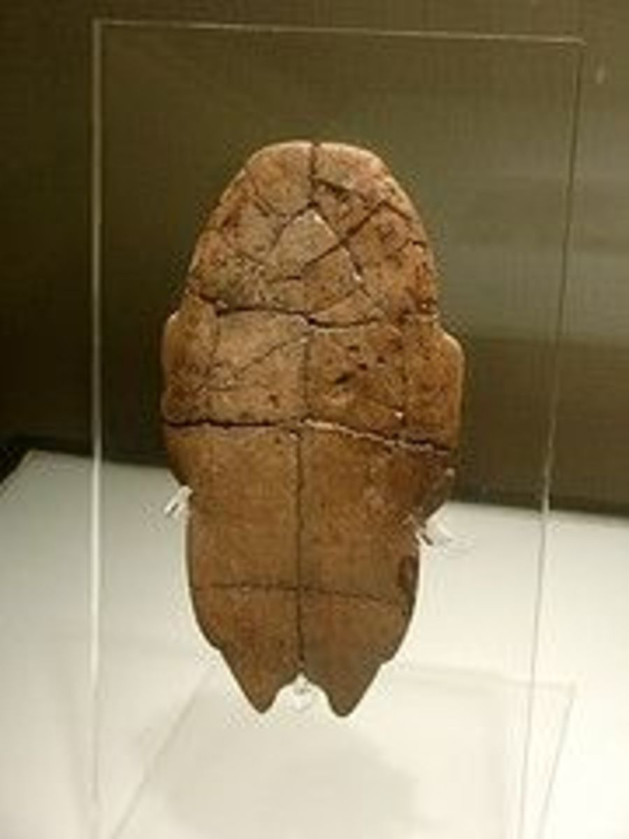 Shang Dynasty Ceremonial Turtle Back