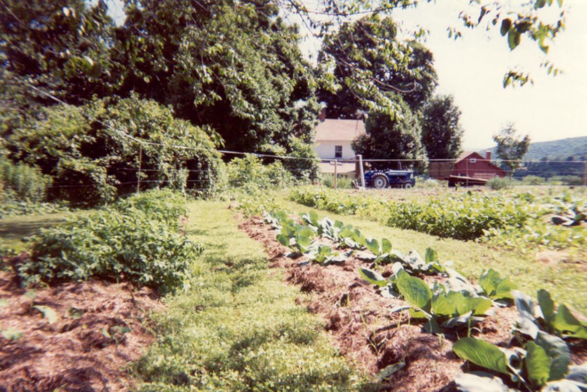 Our farmers market garden on Howland Homestead Farm