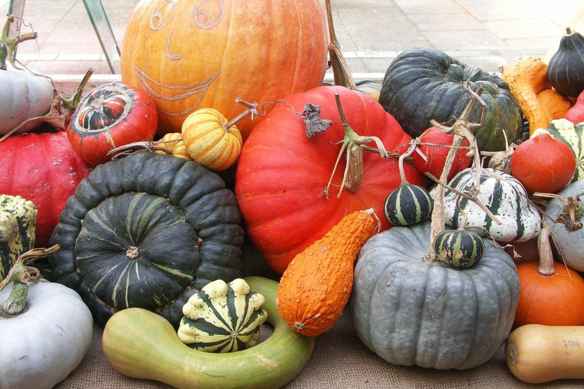 Squash and pumpkins hold up well and can add great color to your farmers market booth.