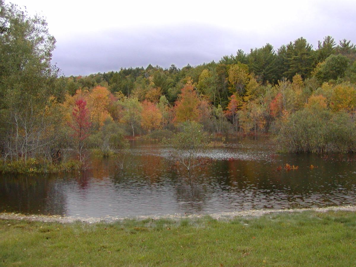 Autumn foliage, Gilford NH bog