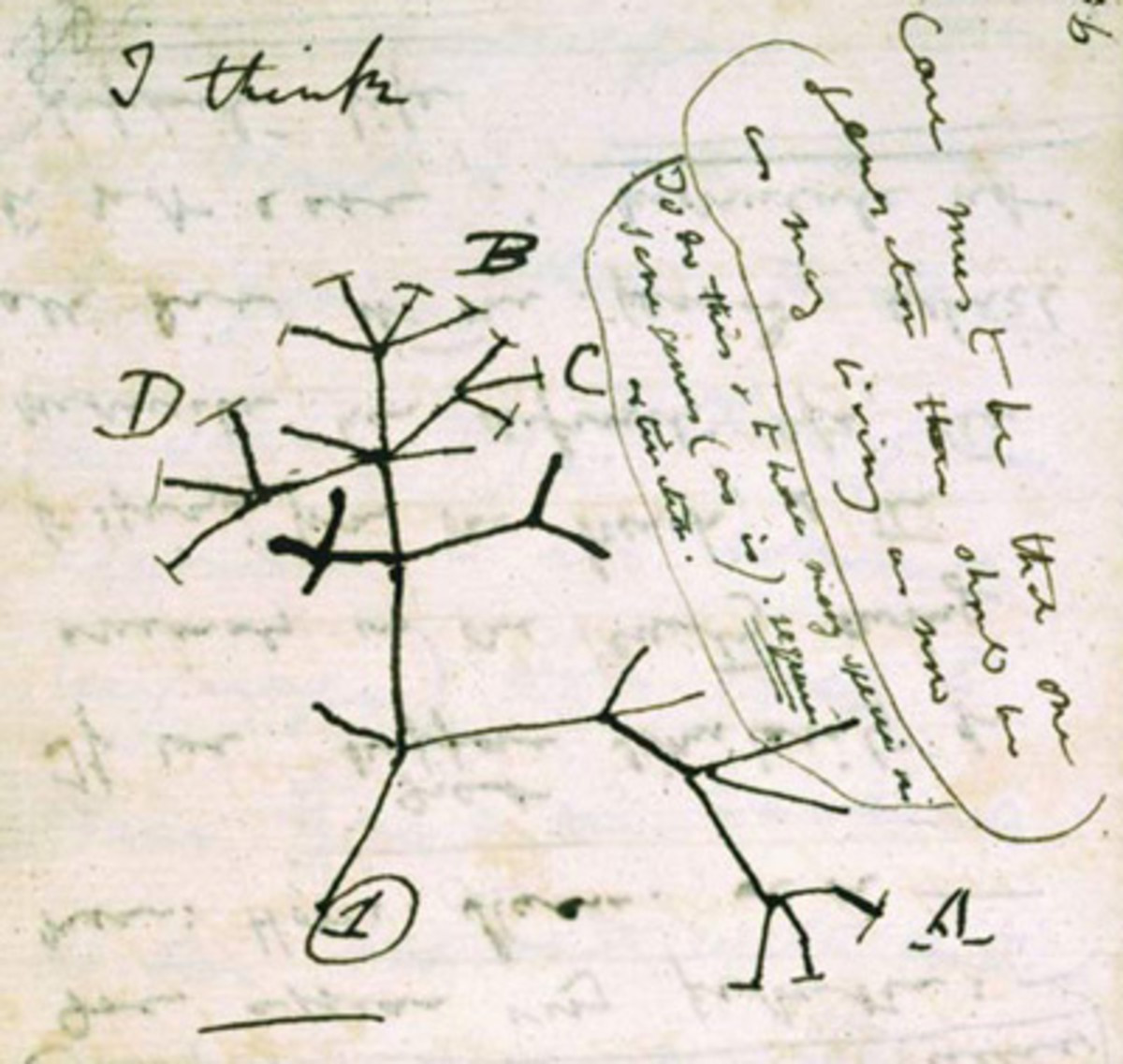 Darwin's Original Sketch of the Tree of Life