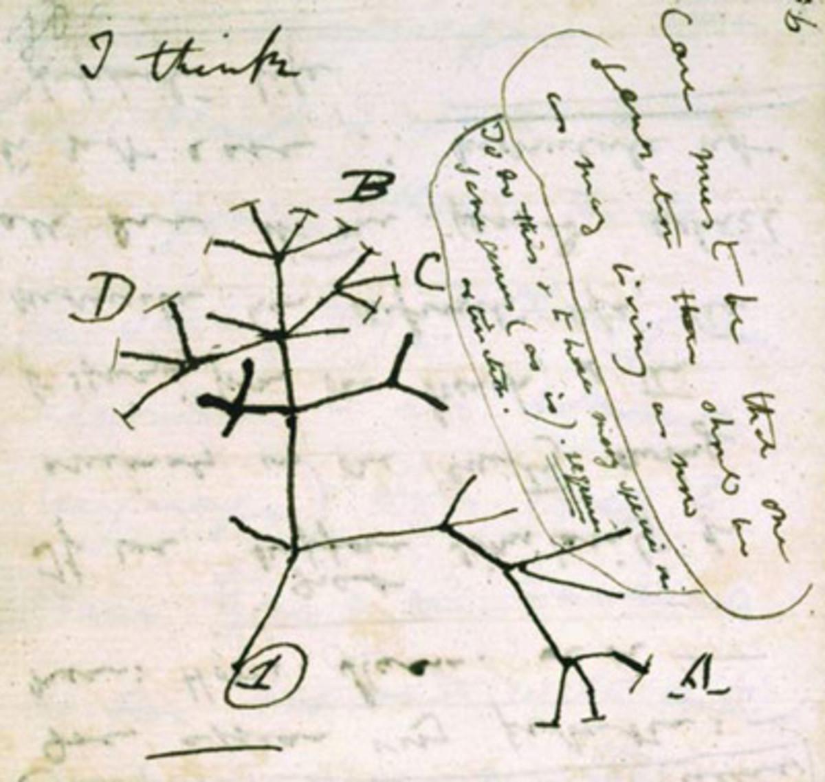 Darwin's Original Sketch of the Tree of Life