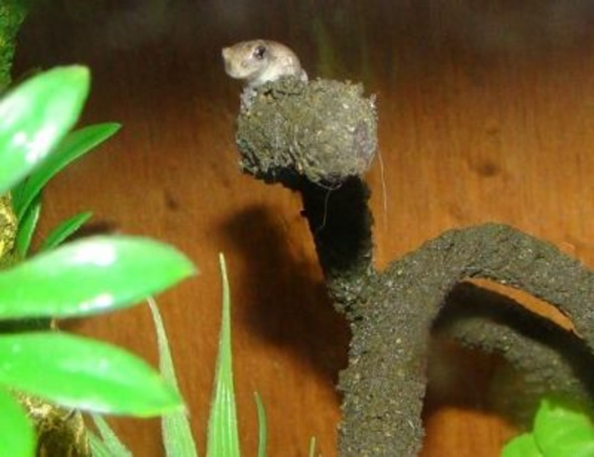 Some frogs love high places, like this one!