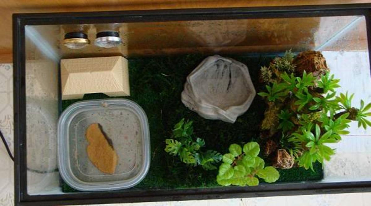 Our frogs' terrarium