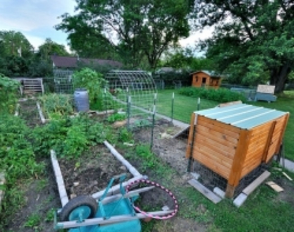 Planning the size of your Vegetable Garden
