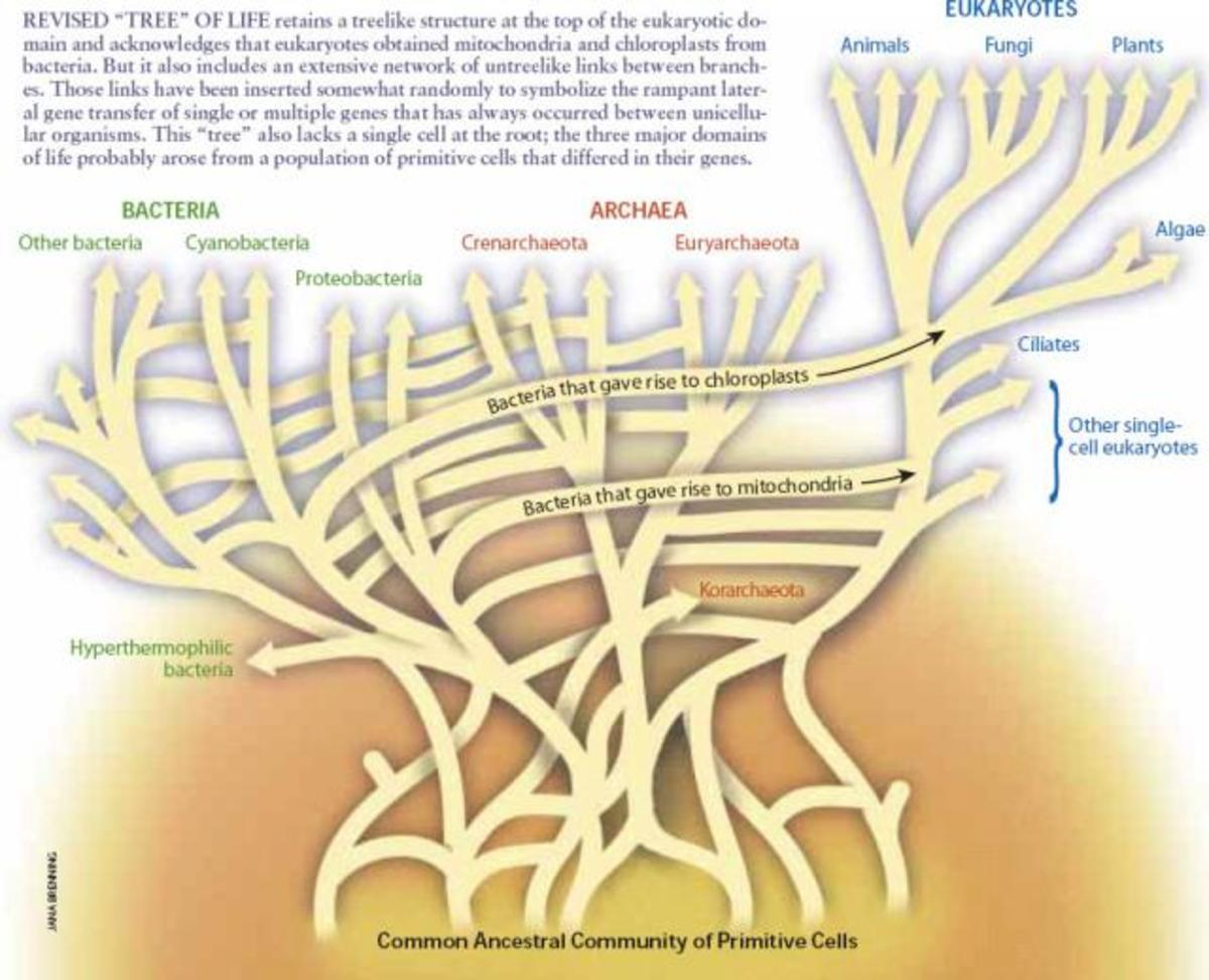 "W. Ford Doolittle (2000) ""Uprooting the tree of life."" Scientific American, 282(2):90-5  The new maps of microbial inter-relatedness are complex. Scientists will soon be producing Webs of Life to describe the higher animals, including humans."