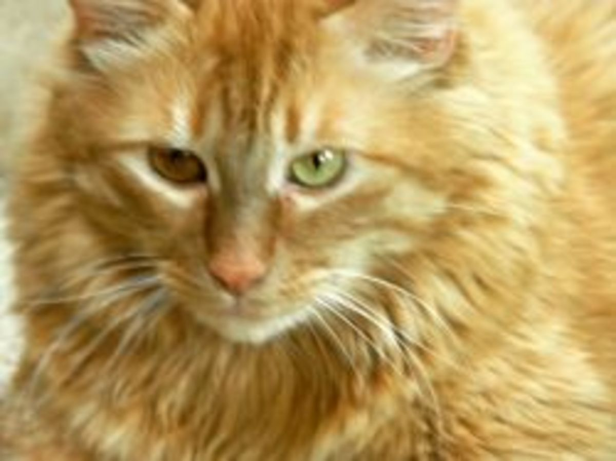 fiv-cat-rescue
