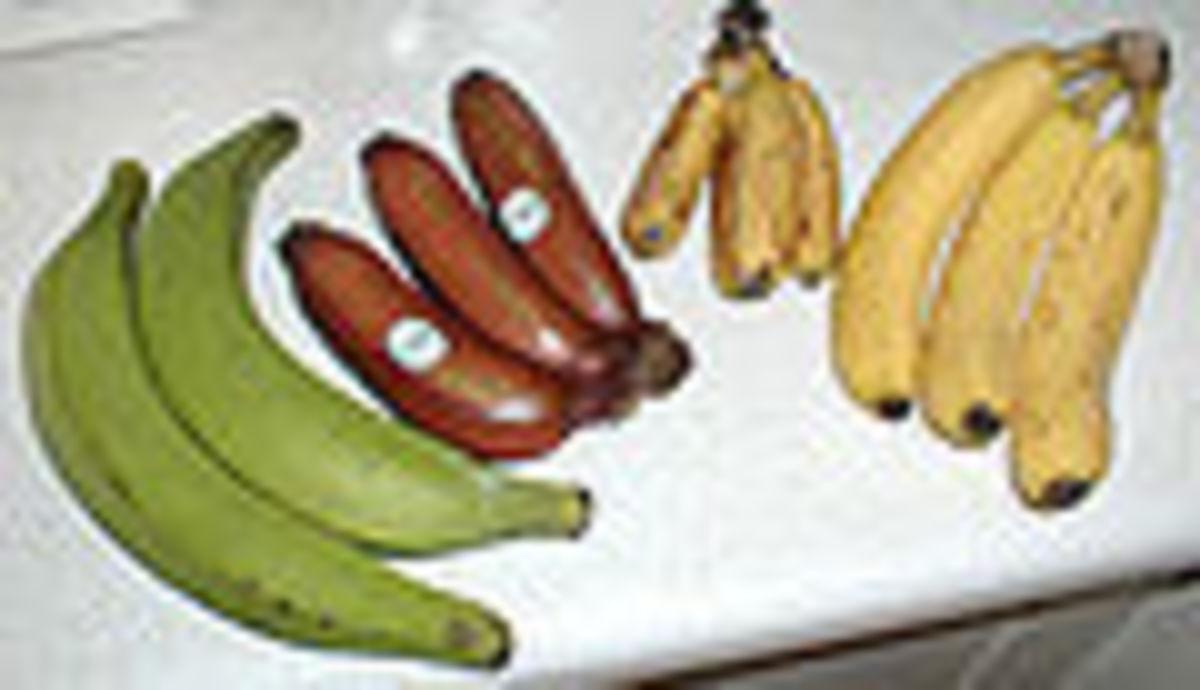 Several banana varieties