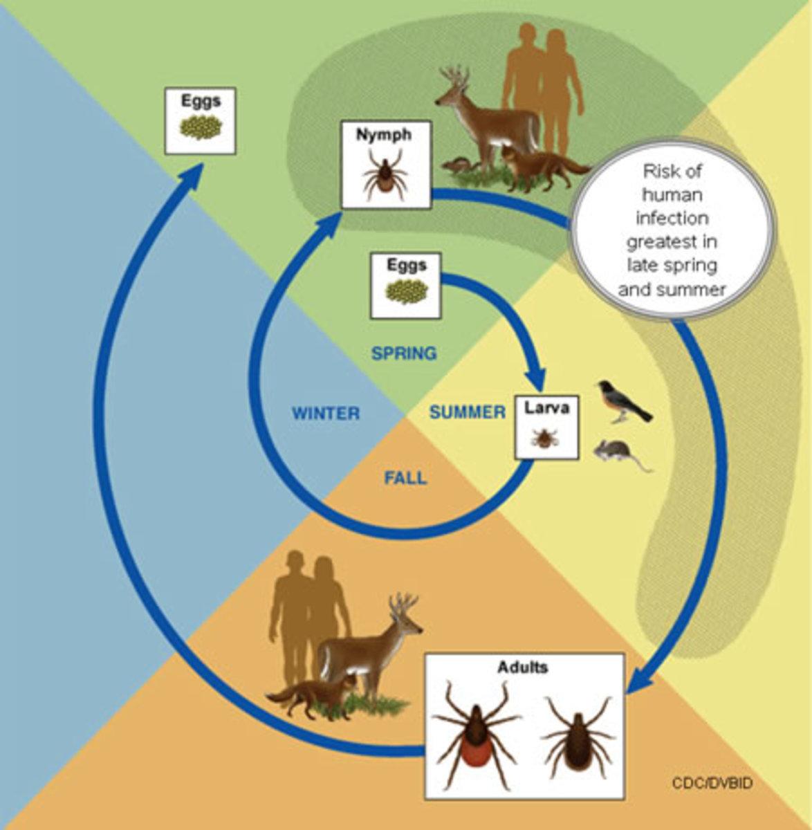 ticks-on-pets