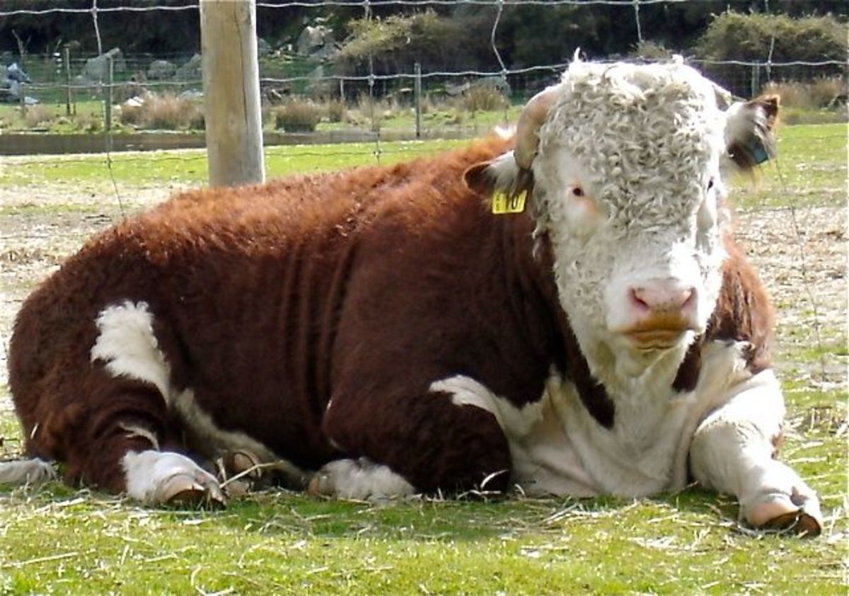 fart tax for cows in New Zealand?