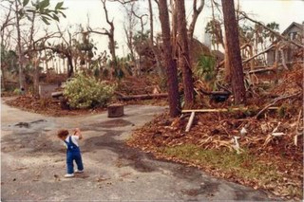 Hurricane Hugo Damage South Carolina