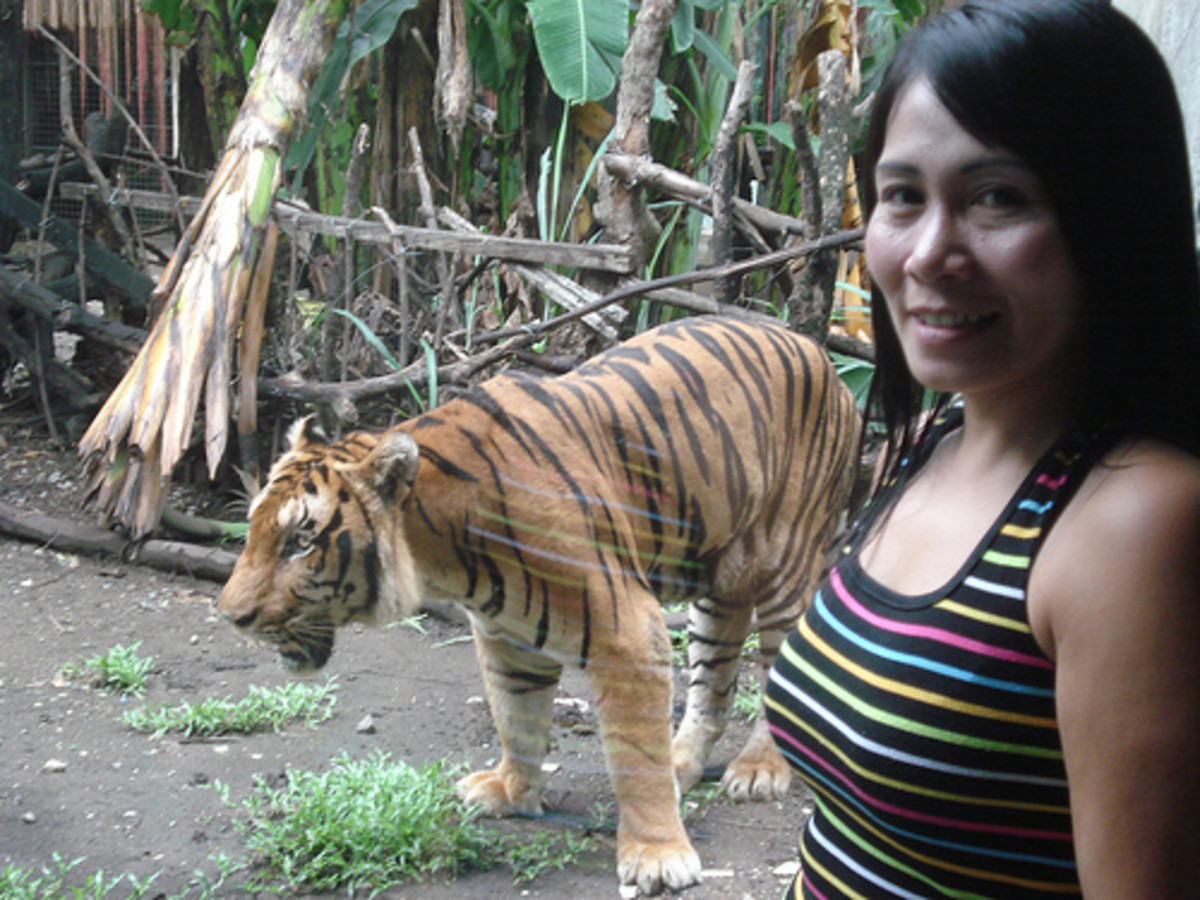 malabon-zoo-in-manila-in-the-philippines