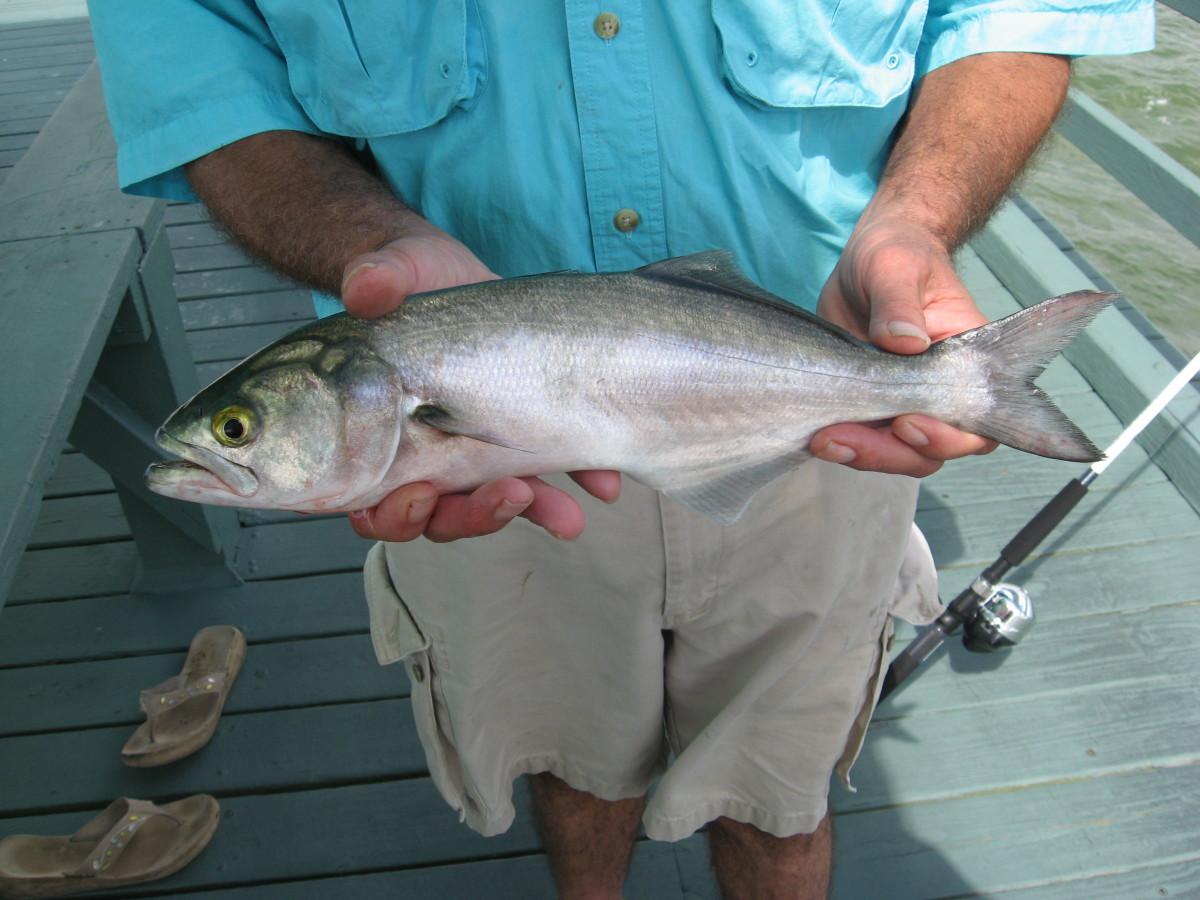 Saltwater fishing tips pier fishing in northern florida for Saltwater fishing basics